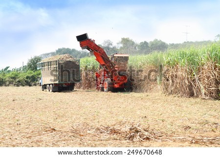sugarcane harvester, four-wheel tractor  - stock photo
