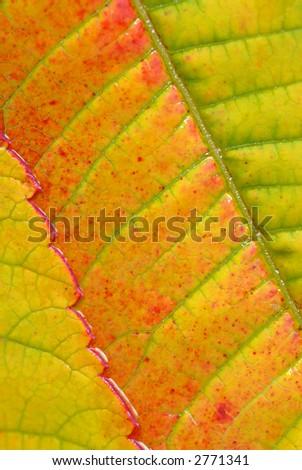Sumac leaves II - stock photo
