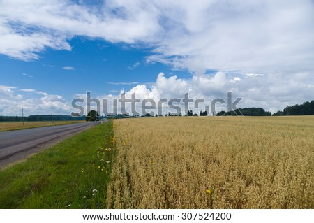 Summer agriculture landscape with oat field and empty asphalt road on the background of cloudscape - stock photo