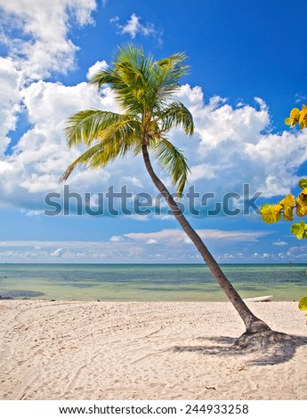 Summer at a tropical beach paradise in Florida, Key West USA, with palm trees, blue sky, clouds and crystal clear water of Atlantic Ocean  - stock photo