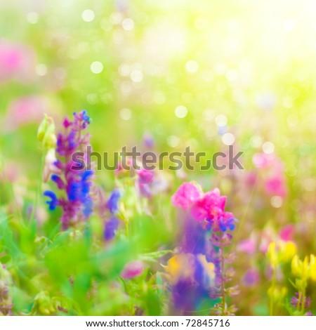 Summer Background. Flowers. Spring Background. Nature Background.  - stock photo