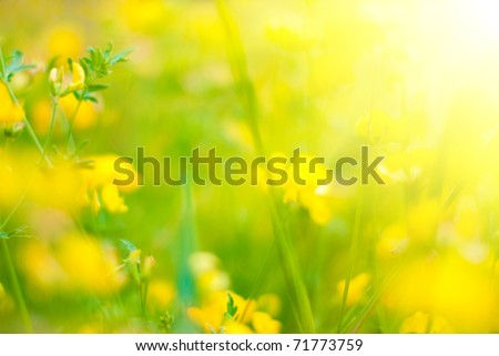 Summer Background. Flowers. Spring Background. Nature Background. Yellow Flowers - stock photo