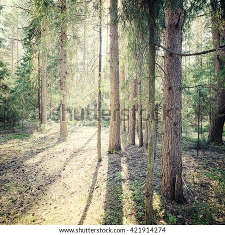 summer background in the forest - stock photo