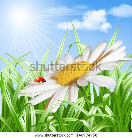 Summer background - Ladybird on daisy flower. - stock photo