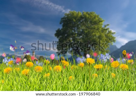 Summer background with grass and flower
