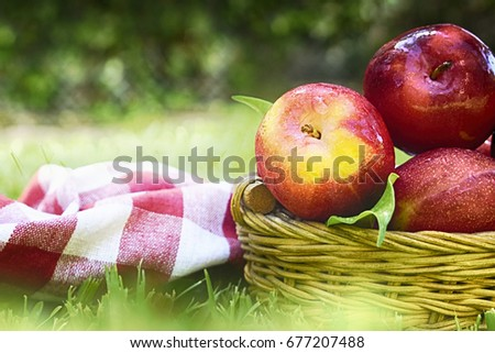 Summer background with ripe plum