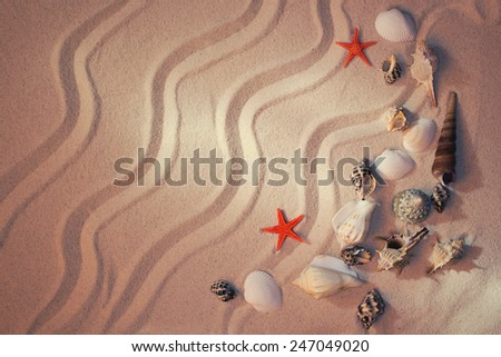 Summer background with sea sand and shells - stock photo