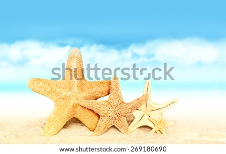Summer beach. Family of starfish on the seashore. - stock photo