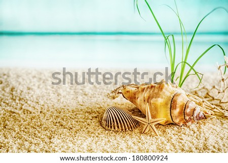 Summer beach in a tropical paradise with a cockle, seashell and small starfish on golden sand with a lush green plant in a conceptual background of travel and summer vacations - stock photo