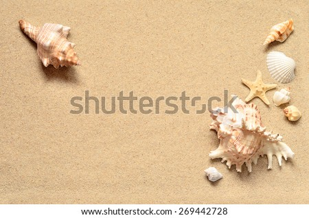 Summer beach. Seashell on the sand. - stock photo