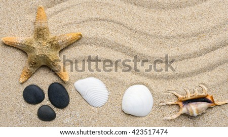 Summer beach. Seashell on the sand.