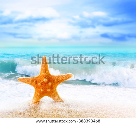 Summer beach with starfish. Background ocean.