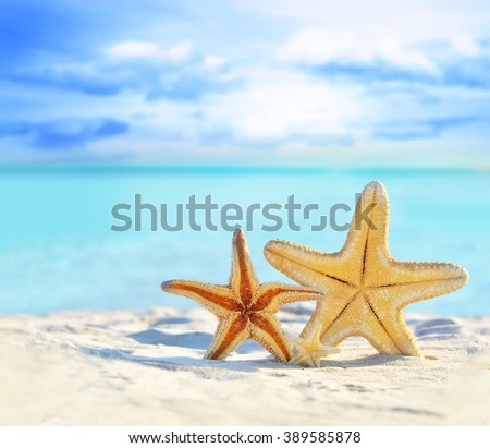 Summer beach with starfish. background sea.
