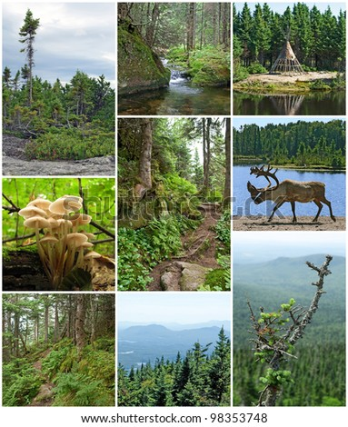 Summer beauty of forests in Quebec, Canada. Canadian nature. - stock photo