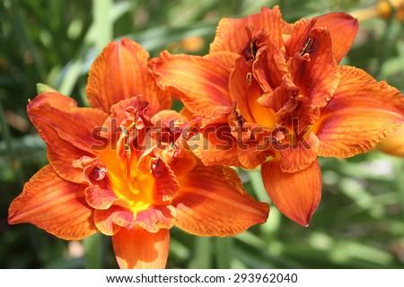 Summer Blooms - stock photo