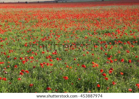 summer blooms plain of Castelluccio Mountains National Park Sibillini Umbria italy - stock photo