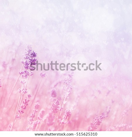 Summer blossoming lavender background, selective focus, shallow DOF, toned, light and heart bokeh background, pastel and soft card