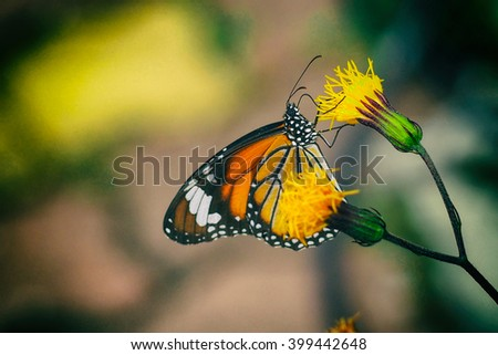 Summer blossoming vintage background with bokeh background, selective focus, toned and butterfly - stock photo