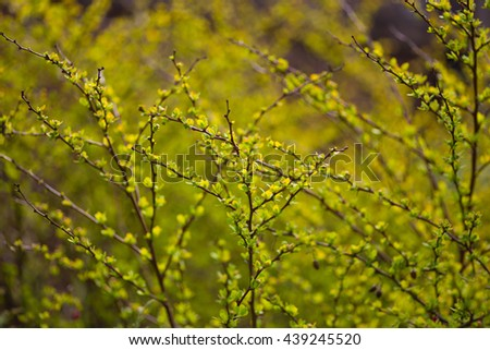 Summer bokeh plants background - stock photo