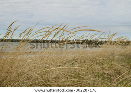 Summer Breeze. Dune grass blows in the breeze with Lake Huron as the backdrop. - stock photo