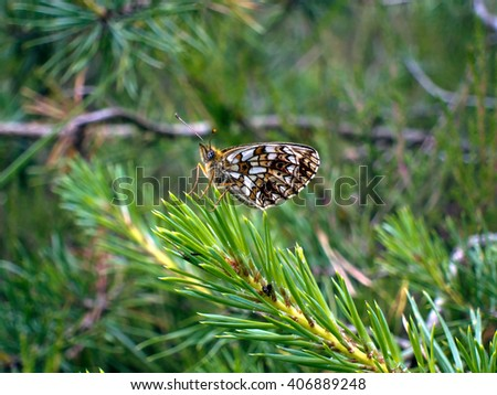 Summer buterfly in serenity and balance - stock photo