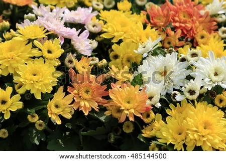 summer colorful flowers
