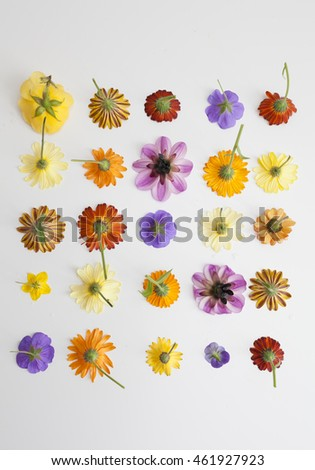 summer colorful flowers aligned in a square on a white background