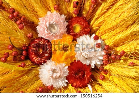 Summer composition with dry flowers
