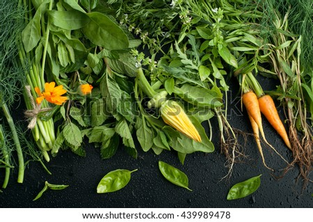 Summer composition with green grass and yellow flowers. Basil, mint, fennel, squash flower calendula on a black background. Vegetarian concept. Farmer's Foods - stock photo