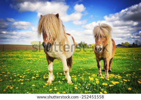 Summer country landscape with two shetland ponies - stock photo