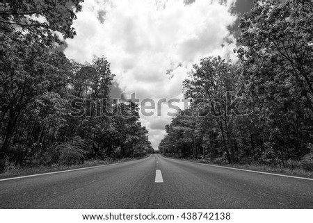 Summer Country Road With Trees Beside, black and white background