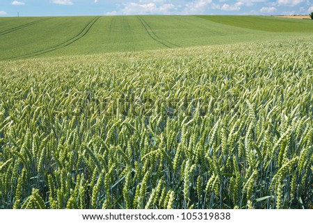 summer country wheat field in France - stock photo