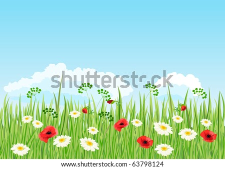 Summer daisy and poppy meadow.  Raster version. Vector version is in my gallery.