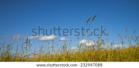 Summer Day and Blue Sky Thinking  - business concept, thinking, positive attitude, good summer feeling in meadow with white clouds and blue sky. - stock photo