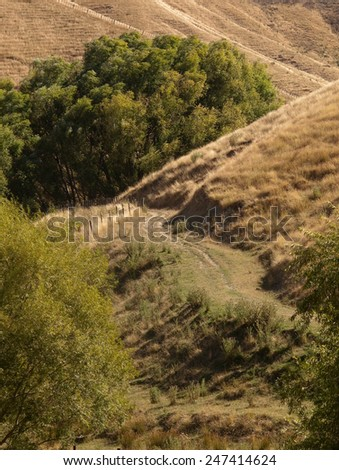 summer drought conditions, East Coast, North Island, New Zealand  - stock photo