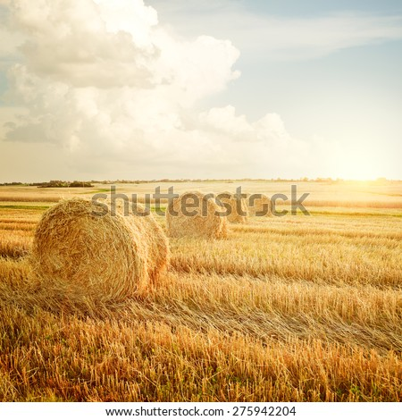 Summer Farm Scenery with Haystack on the Background of Beautiful Sunset. Agriculture Concept. Instagram Styled Toned Photo. - stock photo