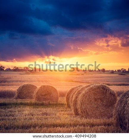 Summer Farm Scenery with Haystacks. Sunset View.