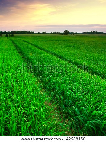 summer field - stock photo