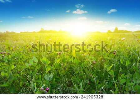 Summer field and blue sky with sunlight.  - stock photo
