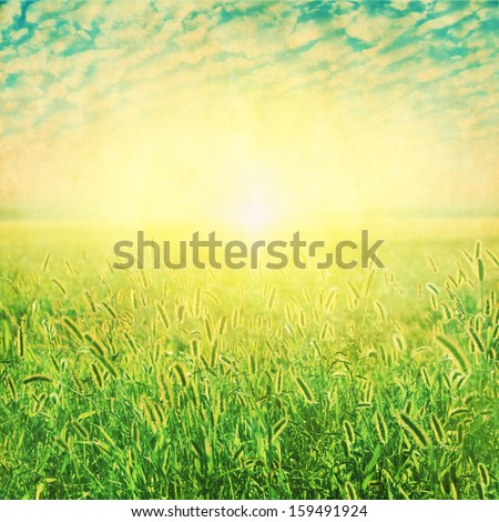 Summer field and sunlight. Grunge and retro style. - stock photo