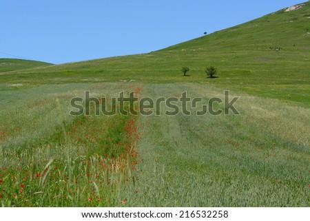 Summer field landscape - stock photo