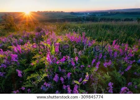 Summer field. Natural looking photo - stock photo