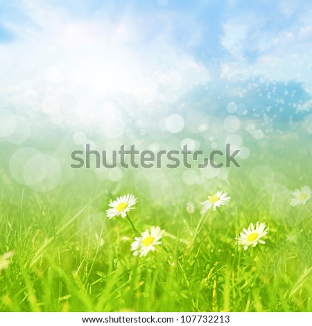 Summer field of camomile flowers with bokeh lights.