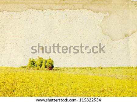 summer field on grunge background - stock photo