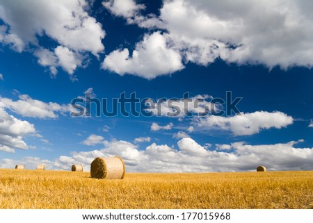 Summer Field with bale of straw - stock photo