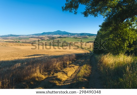 Summer field with cypress in Tuscan landscape in Val d'Orcia - stock photo