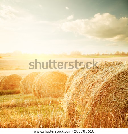 Summer Field with Hay Bales on the Background of Beautiful Sunset. Agriculture Concept. Instagram Styled Toned Photo. - stock photo