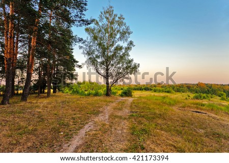 summer field with trees in evening time