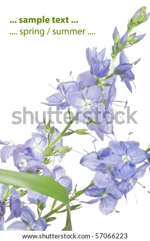 summer flora against white background - stock photo
