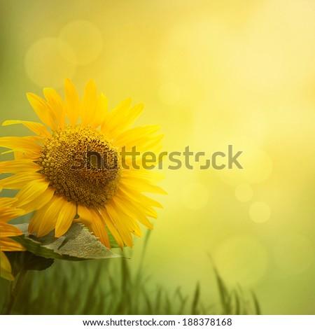 Summer floral background. Sunflower flower in summer sunny day. Border design - stock photo